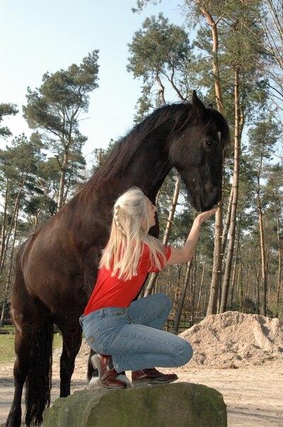 paard spiegel equitherapie