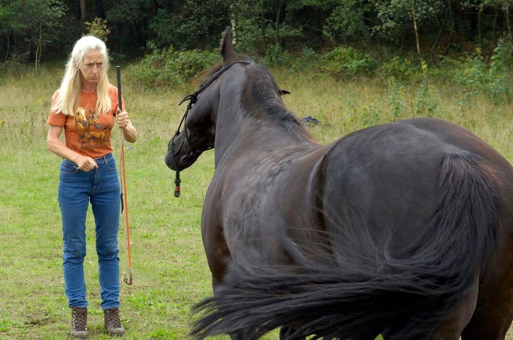 paard coach